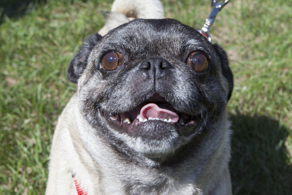 Lola, age 6, of Mattituck.