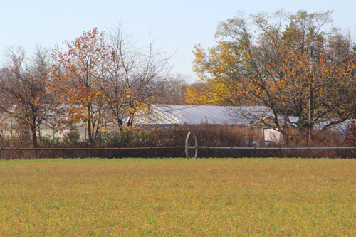 Like many agricultural parcels in Southold Town, Marratooka North Farm, an 18-acre farm off Main Road in Mattituck, is preserved land and can't be developed. (Credit: Carrie Miller file)