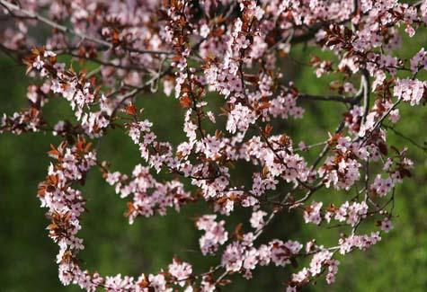 flowers_trees_31