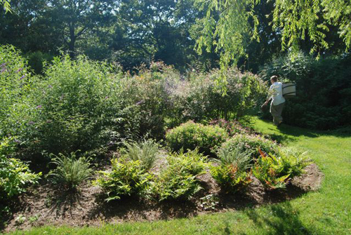 Diane Hewett Courtesy Photo | Conservation landscaping utilizing native plants and mulch.
