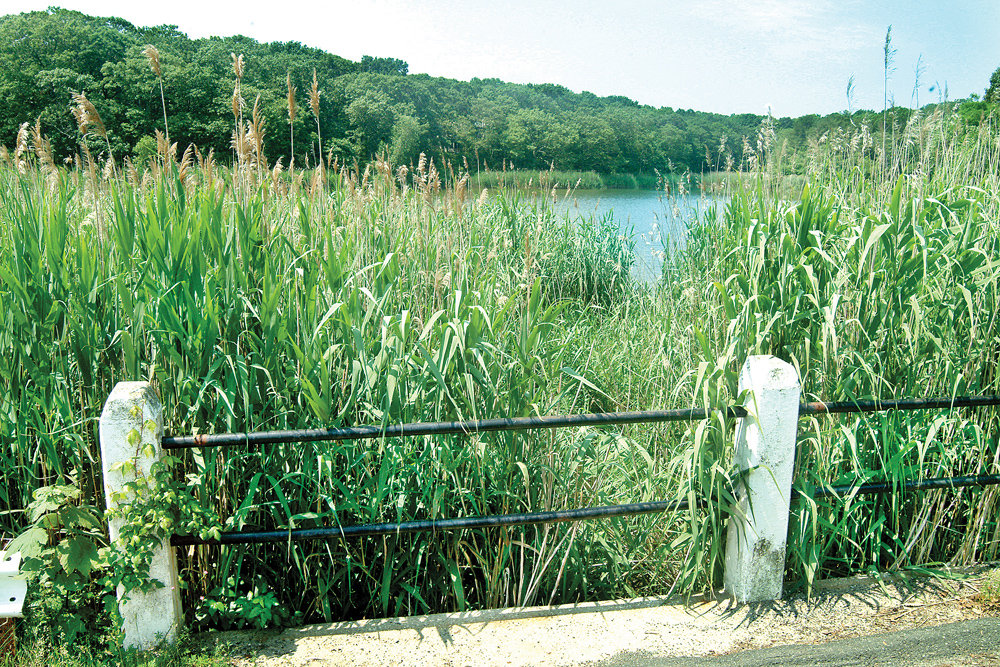 A view of Marion Lake before restoration work started in 2006. (Credit: Judy Ahrens, file)