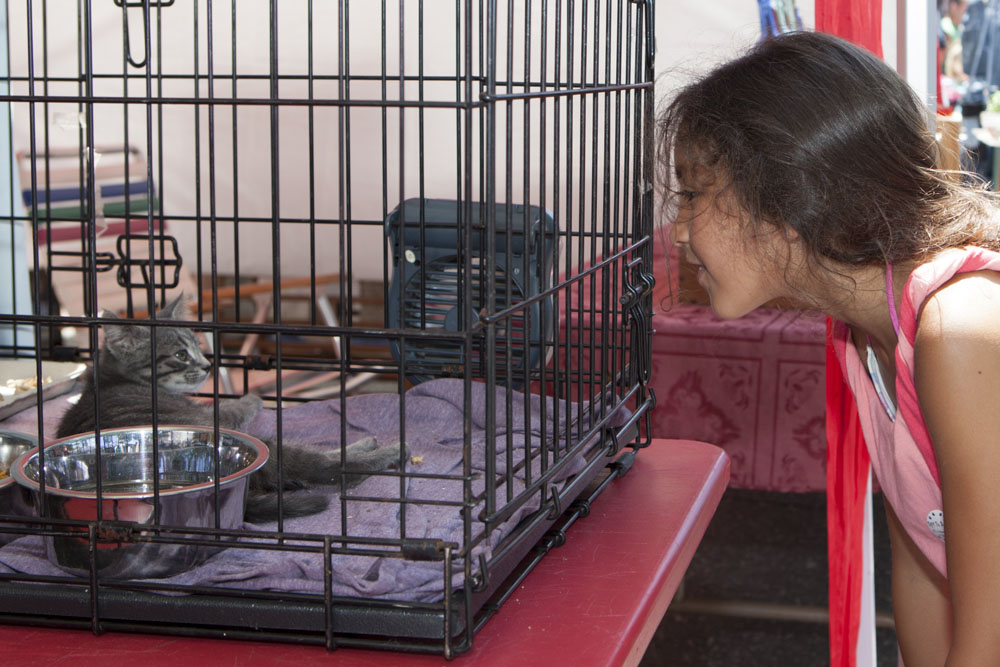 Brooklyn Lascelle, 8, of New Jersey, visits with one of NFAWL's adoptable kittens. (Credit: Katharine Schroeder)