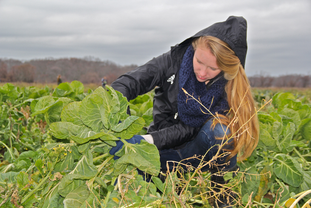 Megan Van Bourgondien, 17, gathering produce.