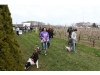 Bark for Life at Martha Clara Vineyards
