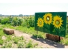 North Fork Potato Chips opens sunflower maze in Cutchogue