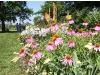 Open Gardens Day